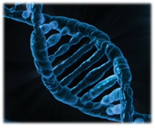 DNA is the most commonly studied piece of the cell