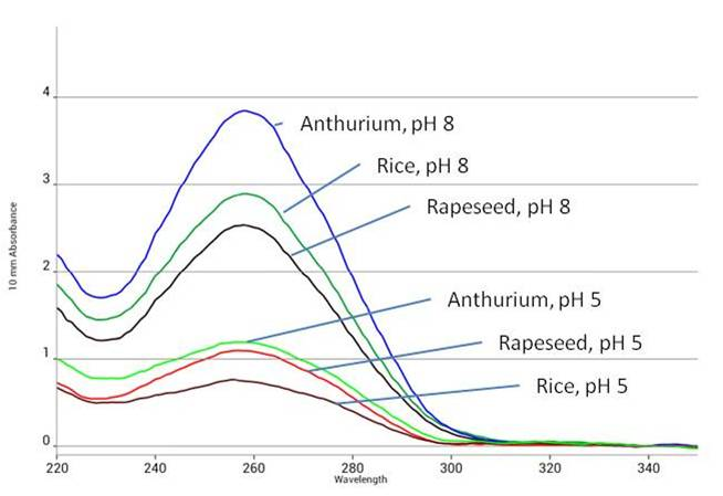 Figure 3.  Absorbance of DNA isolated from plant samples using Synergy™ homogenization buffer at pH 5 and 8.