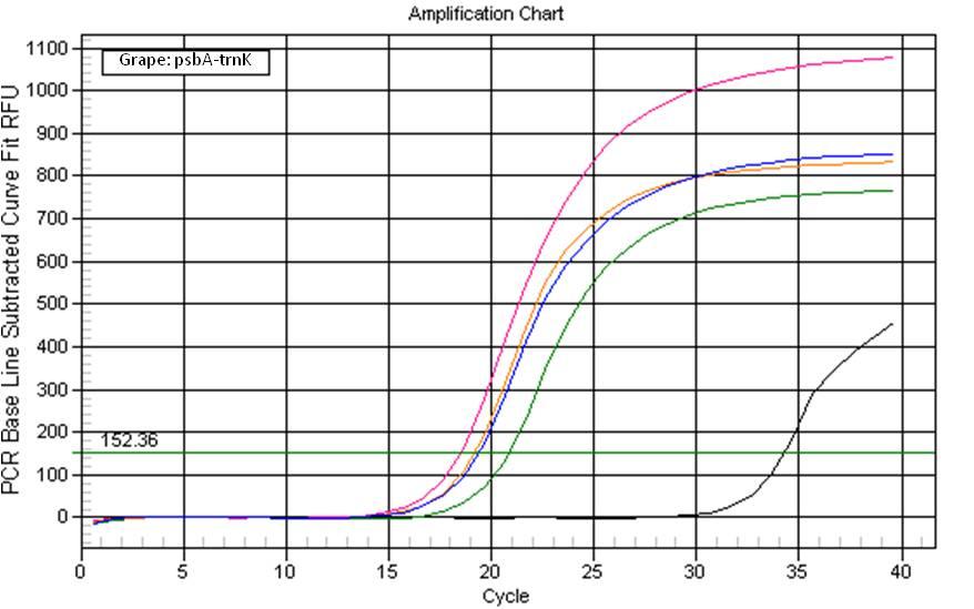 Grape qPCR amplification chart from Synergy Plant DNA Extraction Kit. Key: <b>Black Line</b> = Negative Control, Pink = Synergy&trade; Lysate, <b>Blue</b> = Synergy&trade; Alcohol Precipitated, <b>Green</b> = CTAB, <b>Orange</b> = DNeasy&reg;
