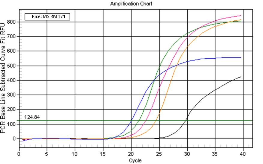 Rice qPCR from DNA Isolated using Synergy. Key: <b>Black Line</b> = Negative Control, <b>Pink</b> = Synergy&trade; Lysate, <b>Blue</b> = Synergy&trade; Alcohol Precipitated, <b>Green</b> = CTAB, <b>Orange</b> = DNeasy&reg