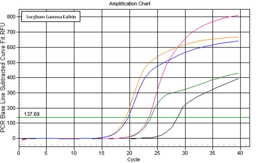 Sorgphum qPCR from DNA Isolated using Synergy. Key: Black Line = Negative Control, Pink = Synergy™ Lysate, Blue = Synergy™ Alcohol Precipitated, Green = CTAB, Orange = DNeasy®